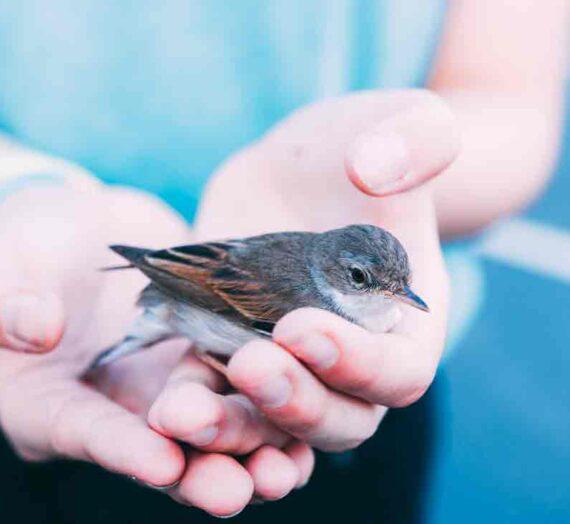 Kaj sporočajo ptice?