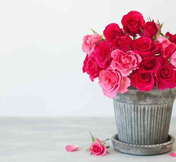 Si kot vrtnica